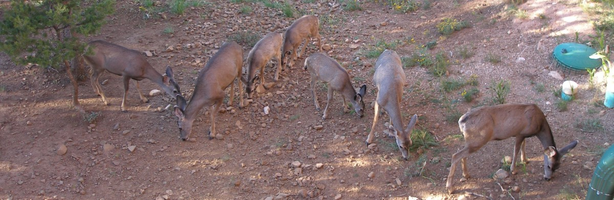 Deer behind Twin Mountain Ruidoso Luxury Cabin